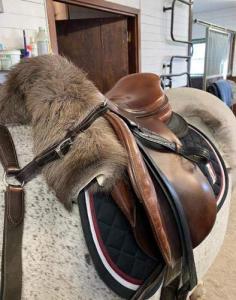 Renskinn häst